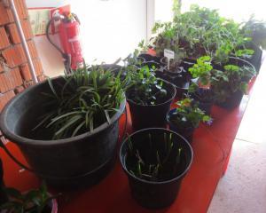 Pflanzentausch